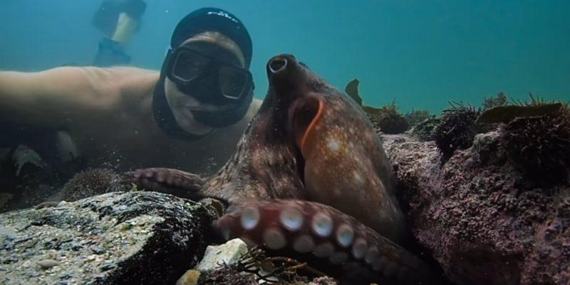 Netflixオリジナル「オクトパスの神秘- 海の賢者は語る」タコに恋をした男のドキュメンタリー!